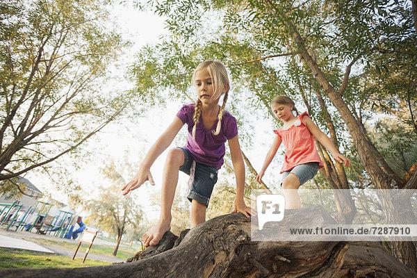 Baum  Ast  groß  großes  großer  große  großen  5-9 Jahre  5 bis 9 Jahre  klettern