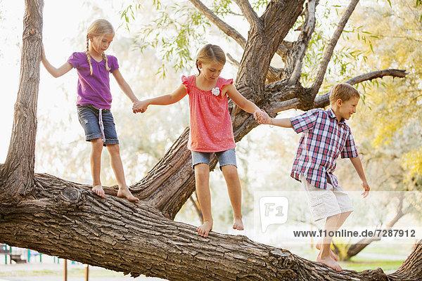 Three kids (4-5  6-7) balancing on tree branch