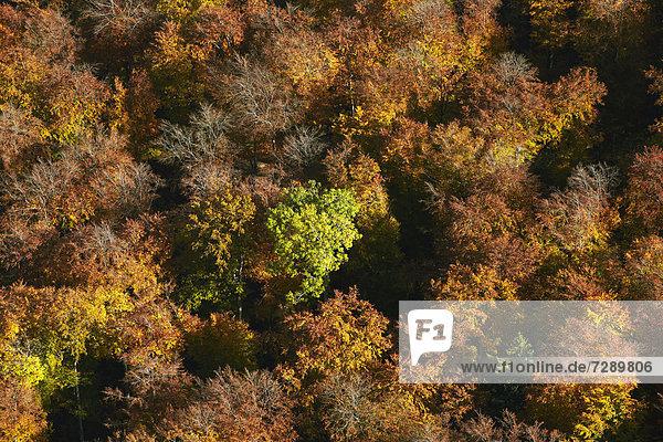 Herbstlicher Wald  Luftbild
