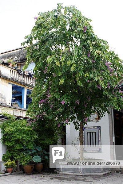 Baum  chinesisch  fünfstöckig  Buddhismus  Georgetown  Malaysia