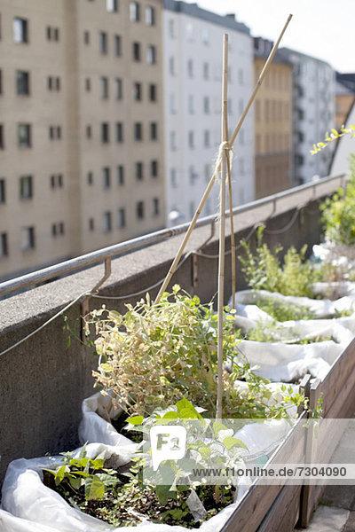 Topfpflanzen in Holzkiste im Stadtgarten