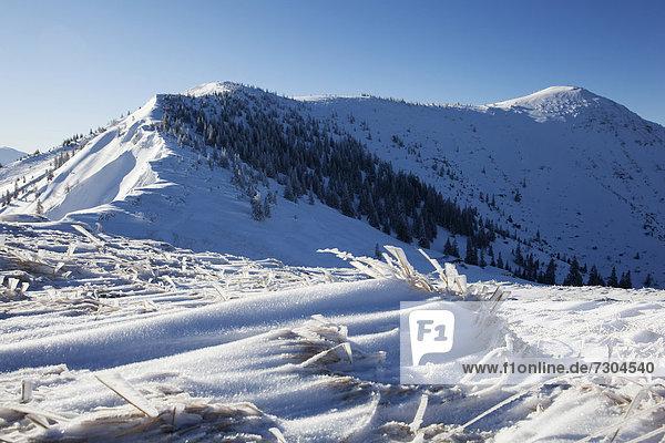 Schneelandschaft  Hirschberg  Bayern  Deutschland  Europa