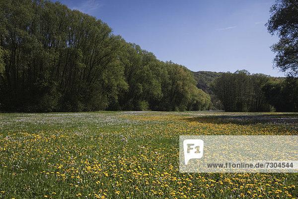 Blumenwiese an der Kratzmühle  Beilngries  Altmühltal  Bayern  Deutschland  Europa