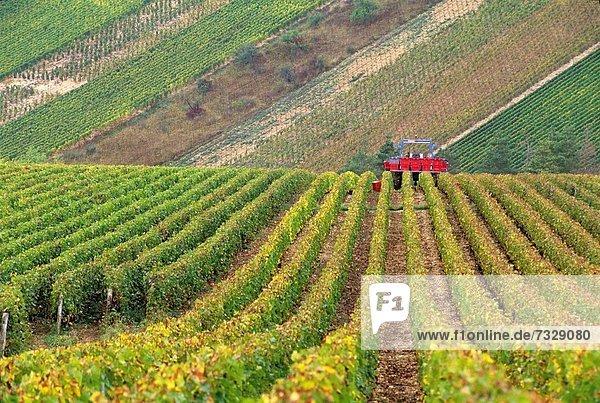 Frankreich , Europa , ernten , Weintraube , Weinberg