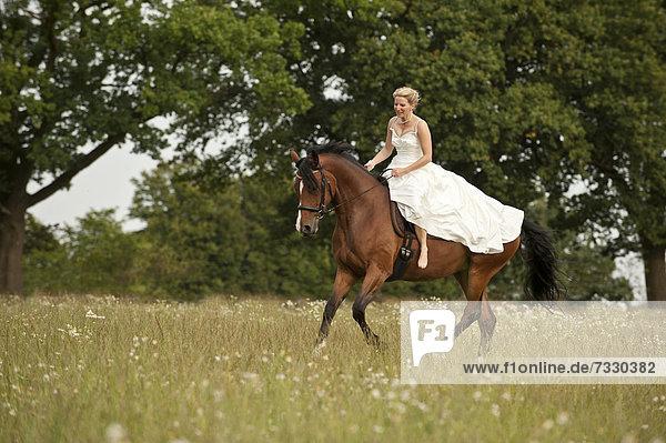 Frau in einem Brautkleid galoppiert auf Hannoveraner über eine Wiese