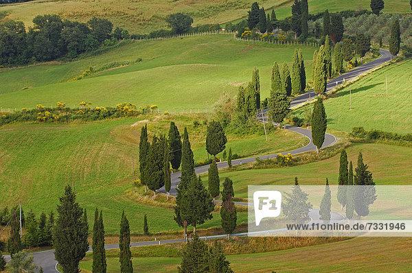 Zypressen entlang der Straße von Pienza nach Montepulciano  Val d'Orcia  UNESCO Weltkulturerbe  Provinz Siena  Toskana  Italien  Europa