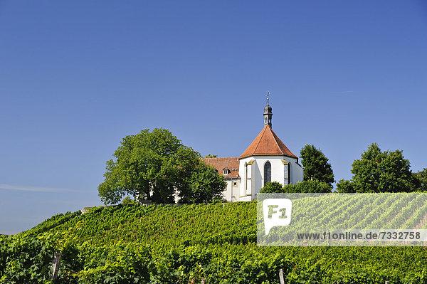 Kloster Vogelsburg auf dem Weinberg  Weinhang der Vogelsburg  Volkach  Bayern  Deutschland  Europa
