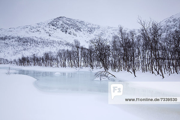 Creek on Kattfjord pass in winter  Kvaloya  Tromso  Norway  Europe
