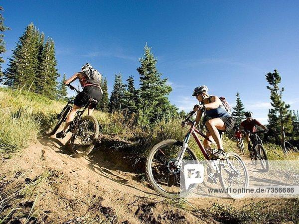 mountain bikers riding down a trail