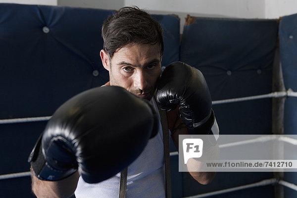 Boxer mit erhobenen Fäusten im Ring
