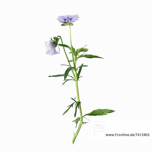 Nahaufnahme von Blumen und Blättern