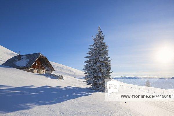 Almhütte am Trattberg  Salzkammergut-Berge  Österreich