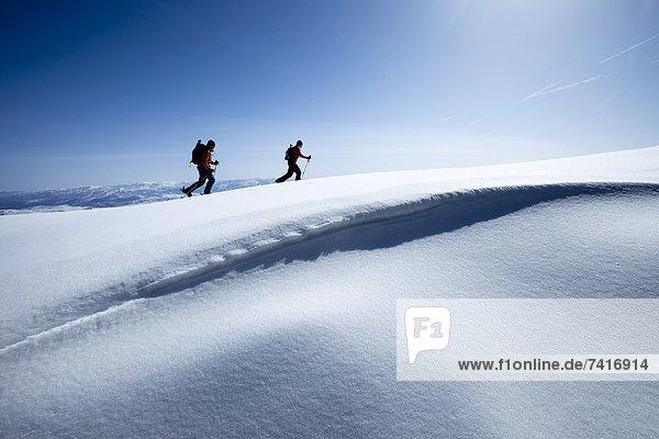 Frische  Himmel  wandern  Gesichtspuder  unbewohnte  entlegene Gegend  2  Ski  Berghüttensänger  Sialia currucoides