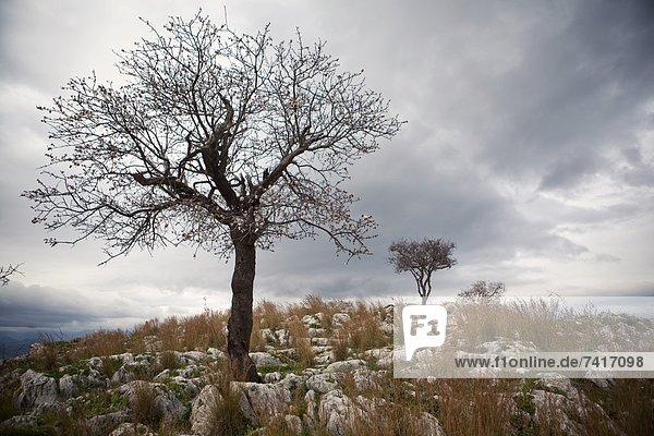 nahe  Wolke  Baum  Himmel  2  Griechenland  Mykene  Grabmal