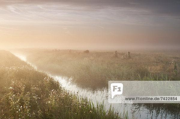 Küste  Sonnenaufgang  Dunst  Ansicht  Sumpf  Lebensraum  graben  gräbt  grabend  August  England  grasen  Kent