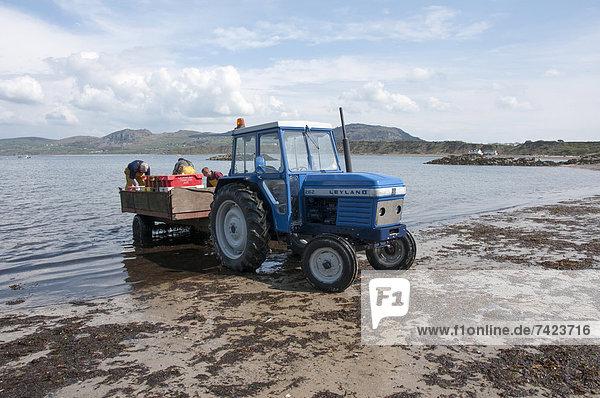 beladen  Traktor  Fischer  Gwynedd  Mai  Wales