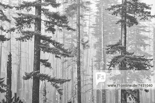 Schneebedeckte Bäume