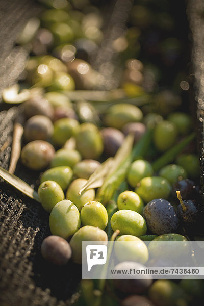 Korb  grün  schwarz  Olive