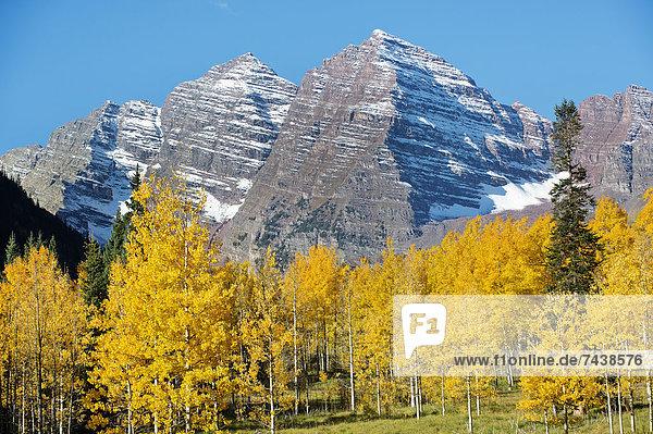 Berg  Baum  gelb  Schnee