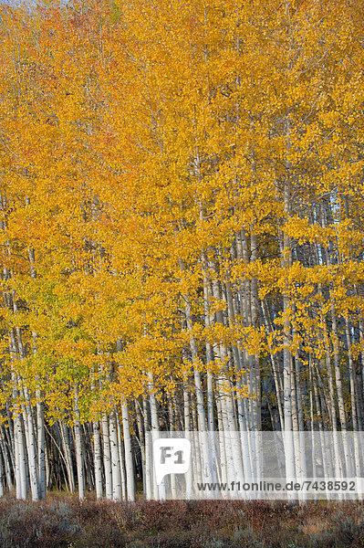 Ländliches Motiv  ländliche Motive  Baum  gelb  Landschaft