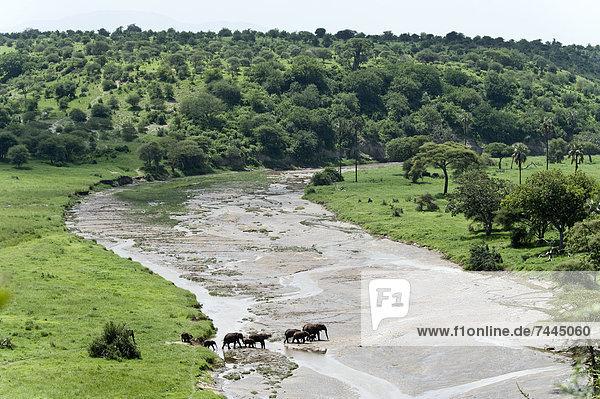 Afrikanische Elefanten  Loxodonta africana  Tarangire-Nationalpark  Tansania  Afrika
