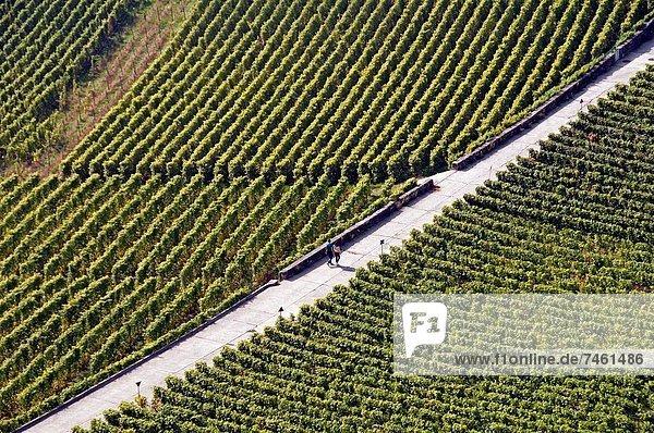 Young couple walking across vineyards  Lavaux vineyards  Unesco heritage  Swiss Riviera  canton Vaud  Switzerland  Lake Geneva shore
