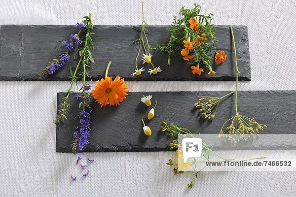 Blume  Vielfalt  Garten