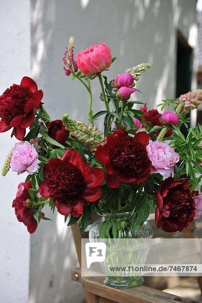 Außenaufnahme  Blume  Bündel  pink  rot  freie Natur