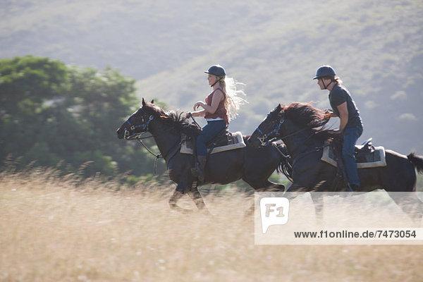 Paar Reitpferde in ländlicher Landschaft