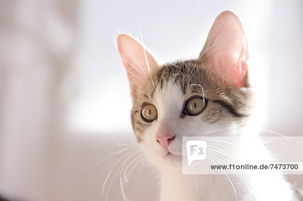 Porträt von Kätzchen Porträt von Kätzchen