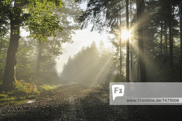 Morgen  Weg  Dunst  Wald  Deutschland  Hessen  Sonne Morgen ,Weg ,Dunst ,Wald ,Deutschland ,Hessen ,Sonne