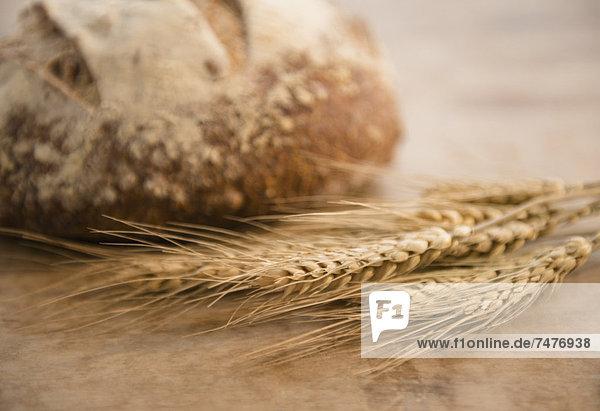 Mais  Zuckermais  Kukuruz  Brot  Brotlaib  Close-up  close-ups  close up  close ups