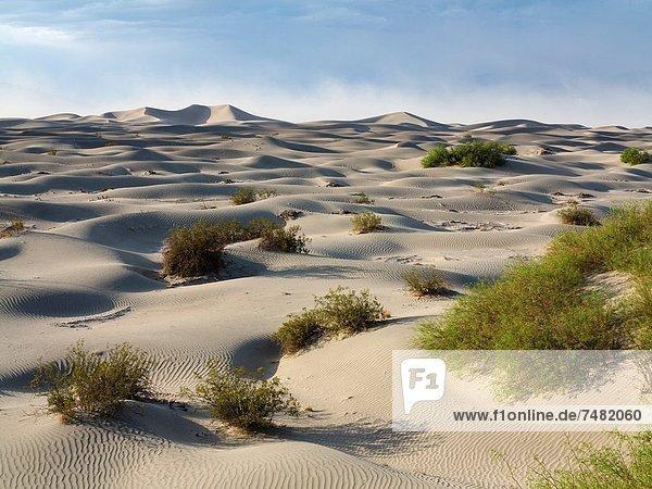Vereinigte Staaten von Amerika USA Nationalpark heben Baum Kraft Wind Hintergrund Sand verteilen jung Death Valley Nationalpark flach Düne Kalifornien Honig