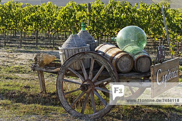 Eingang zum Weingut Capitoni  Orcia-Tal  Val dÆOrcia  Pienza  Region Toskana  Provinz Siena  Italien  Europa