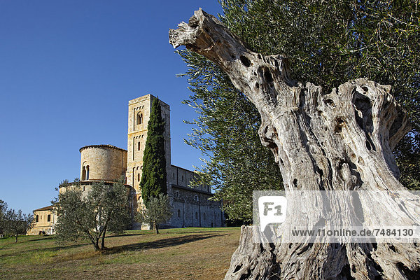 Abtei SantÆAntimo  Castelnuovo del Abate  Montalcino  Region Toskana  Provinz Siena  Italien  Europa
