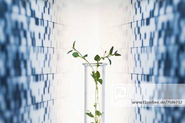 Gesundheitspflege  Hintergrund  Blumenvase