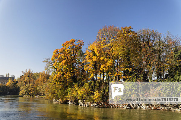 Europa Baum Fluss Insel Herbst Schweiz