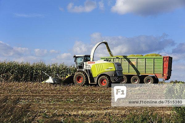 Maishäcksler füllt den parallel gezogenen Hänger mit Mais  Rehna  Mecklenburg-Vorpommern  Deutschland  Europa  OffentlicherGrund