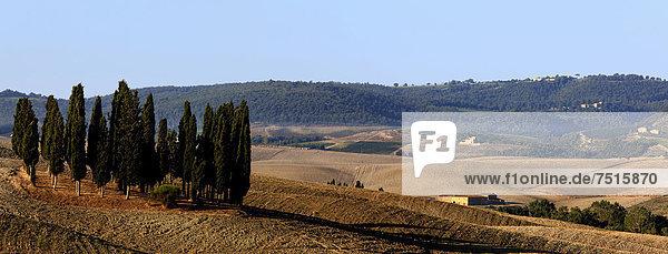 Zypressenhain auf einem gepflügten Acker  Orcia-Tal  Toskana  Italien  Europa