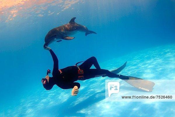 Delphin  Delphinus delphis  Großer Tümmler  Große  Tursiops truncatus  Dalbe  Odessa  Ukraine