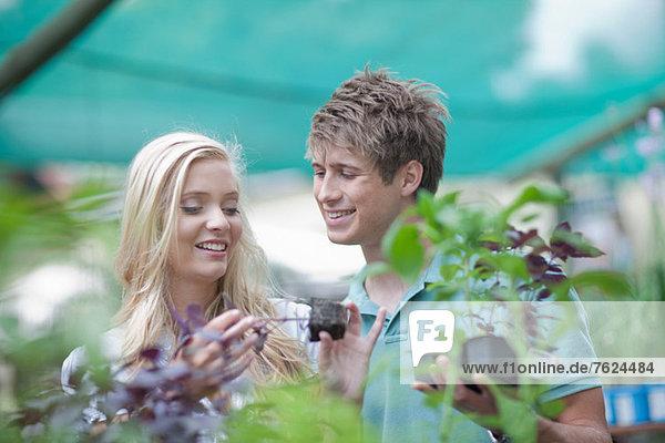 Paarkauf für Pflanzen in der Baumschule