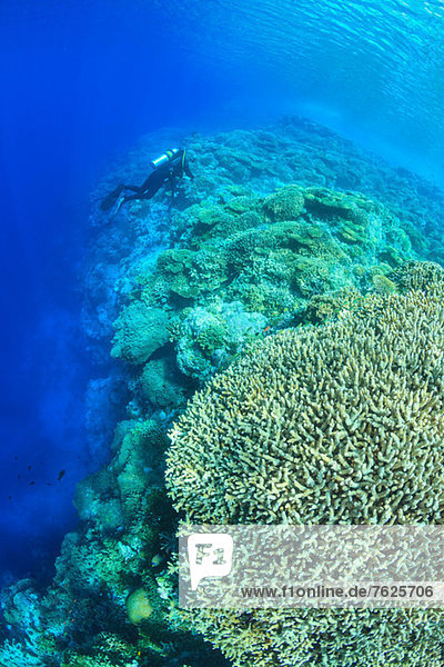 Taucher schwimmen im Korallenriff