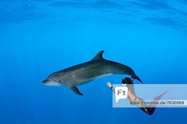 Delphin  Delphinus delphis  Europa  Großer Tümmler  Große  Tursiops truncatus  Dalbe  Odessa  Ukraine