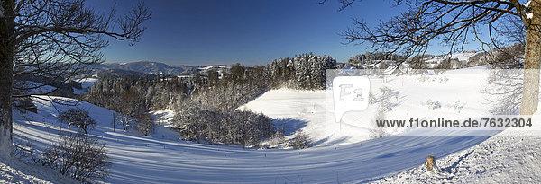 Schwarzwald im Winter  nähe St. Märgen  Baden-Württemberg  Deutschland  Europa
