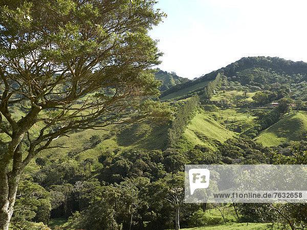 Grüner Hochgebirgswald  Nationalpark RicÚn de la Viejo  Provinz Guanacaste  Costa Rica  Zentralamerika