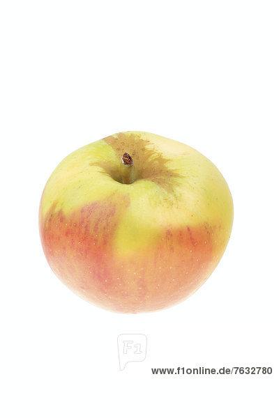 Apfel der Apfelsorte Gehres Rambur