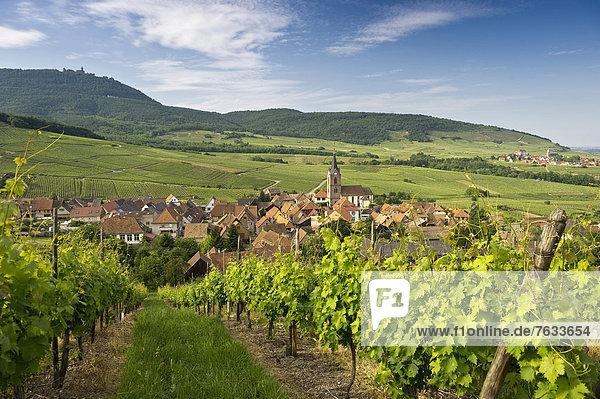 Hunawihr und Weinberge  hinten die Hoch-Königsburg  Elsass  Frankreich  Europa