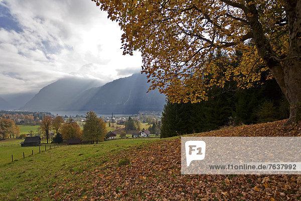 Helligkeit Europa Wald Nebel Holz Herbst Österreich Laub Stimmung Oberösterreich