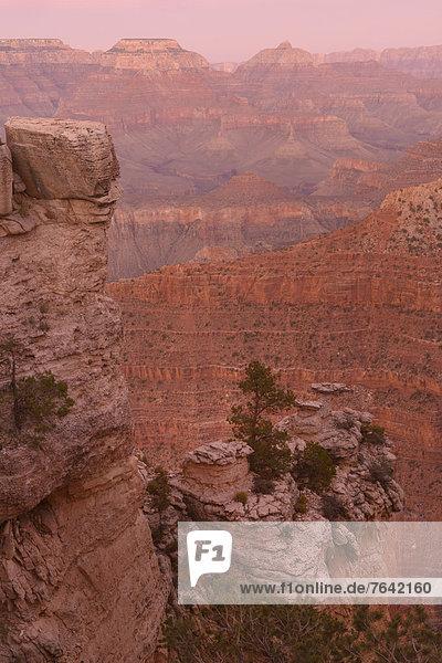 Vereinigte Staaten von Amerika  USA  Nationalpark  Landschaft  Amerika  Baum  Steilküste  Wunder  niemand  Natur  Nordamerika  pink  Arizona  Süden  Grand Canyon  UNESCO-Welterbe  South Rim  Williams