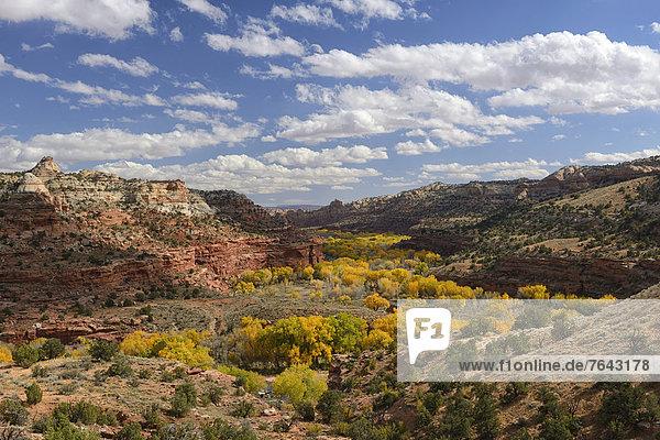 Vereinigte Staaten von Amerika  USA  Amerika  Baum  Hochebene  Schlucht  Colorado  Laub  National Monument  Utah